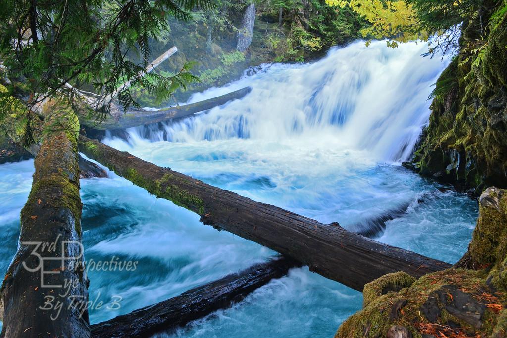 Exhilaration - Willamette National Forest, Oregon - USA
