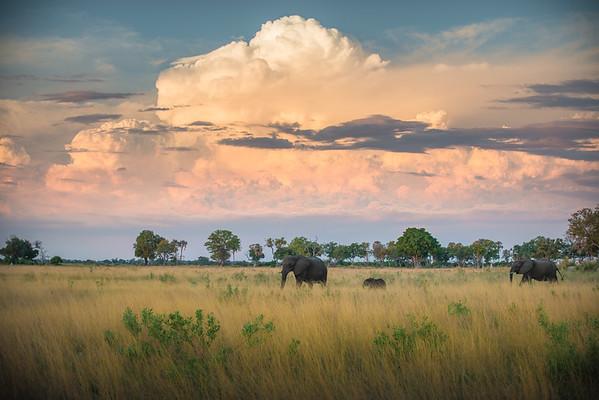 Elephants Under a Painted Sky