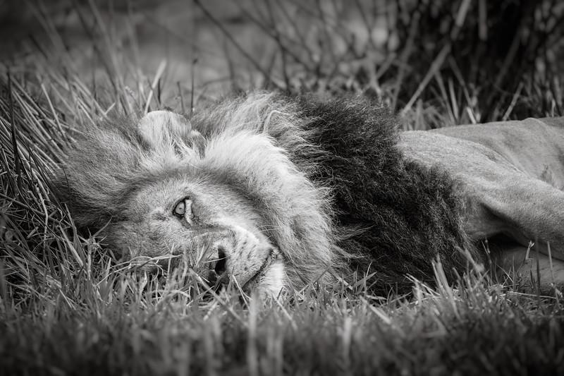 Resting King