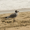 Sea Gull-2