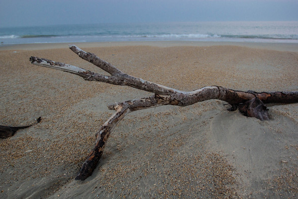 Tree Limb on Beach-1