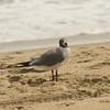 Sea Gull-3