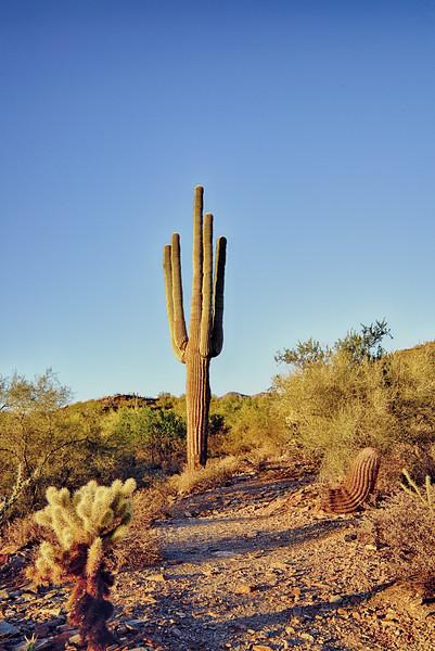Cactus Kings