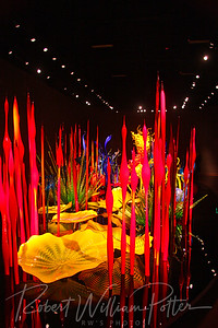 0225-Chihuly glass exhibit