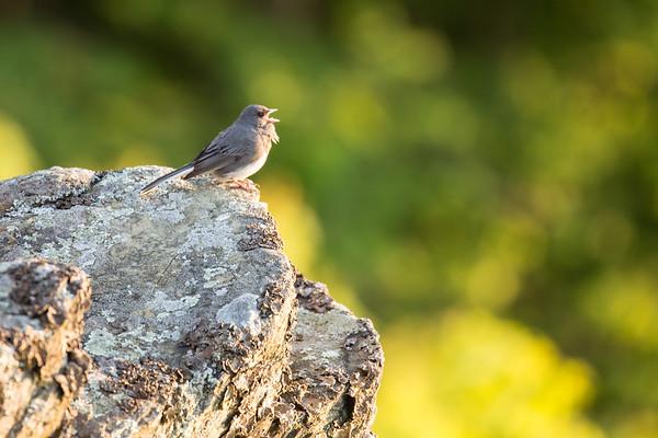 Bird Serenade