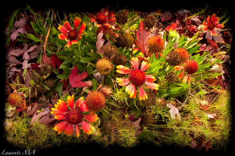 Autumn Garden Flowers