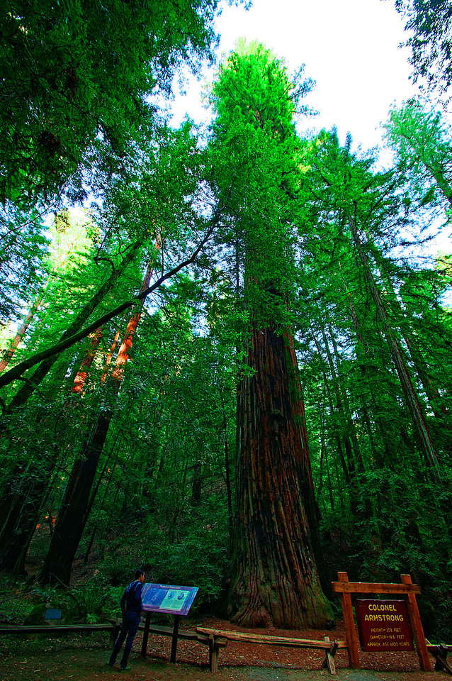 Armstrong Redwood State Park California