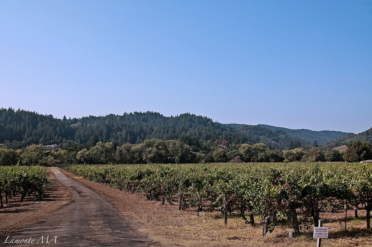 Sonoma Vin Road