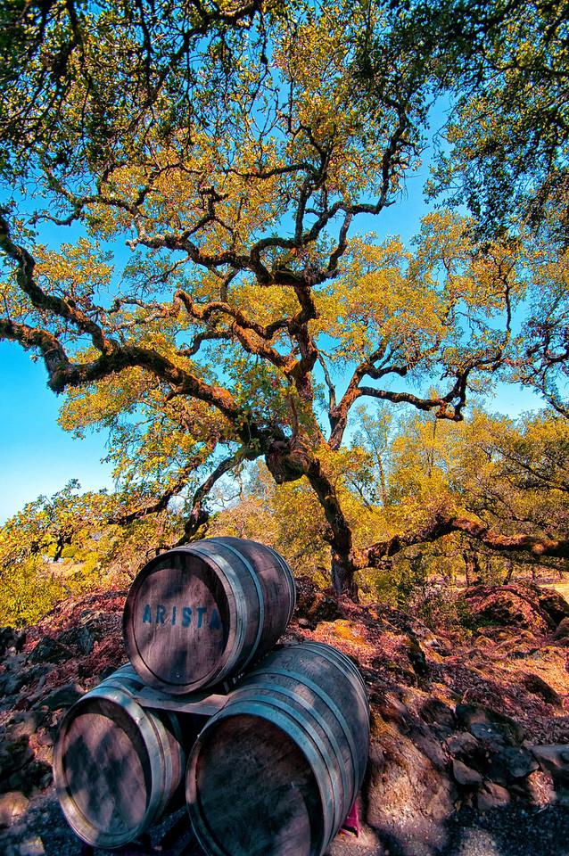Sonoma Oak Barrels