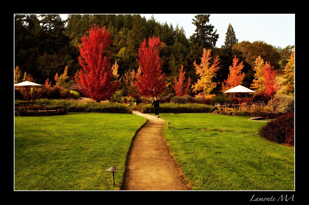 Sonoma Autumn