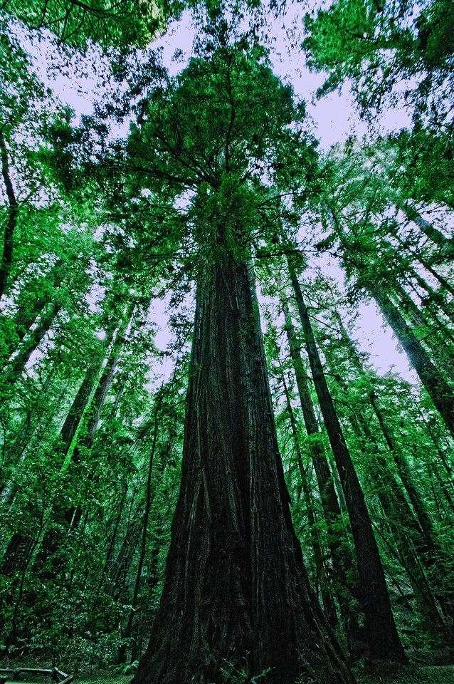 Armstrong Redwood State Park