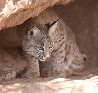 BobCat Tucson_10-10-23_0026