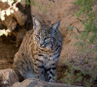 BobCat Tucson_10-10-23_0013