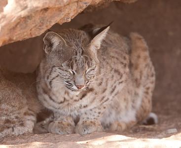 BobCat Tucson_10-10-23_0034