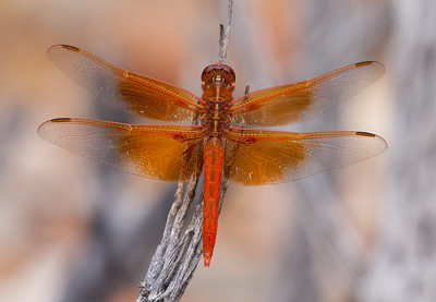 DragonFly Tucson_10-10-23_IMG_2282