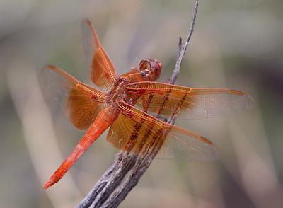 DragonFly Tucson_10-10-23_IMG_2288