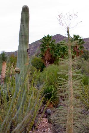 Scenery Tucson_10-10-23_IMG_2232
