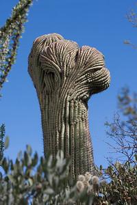 Scenery Tucson_10-10-23_IMG_2148