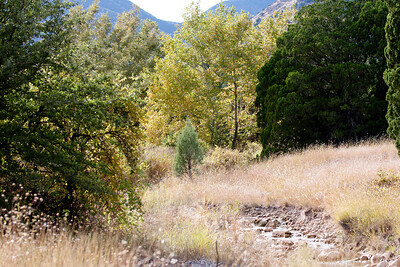 Scenery Tucson_10-10-25_IMG_2627