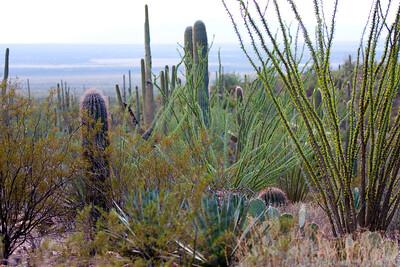 Scenery Tucson_10-10-23_IMG_2404