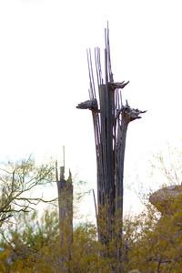 Scenery Tucson_10-10-23_IMG_2402