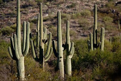 Scenery Tucson_10-10-27_7I2B2538