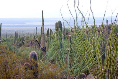 Scenery Tucson_10-10-23_IMG_2403