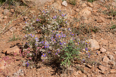 Scenery Tucson_10-10-26_IMG_2685