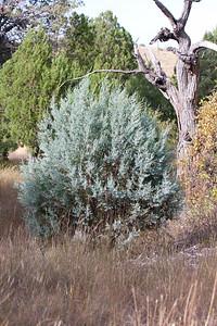 Scenery Tucson_10-10-25_IMG_2629