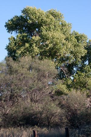 Scenery Tucson_10-10-24_IMG_2501