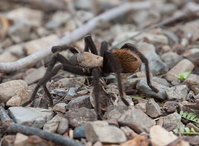 Taratula Tucson_10-10-23_7I2B0310
