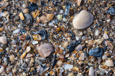 Shells, shells and more shells - Oak Island, NC