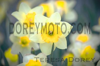 IMG_5307-Edit