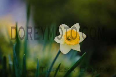IMG_5300-Edit-2