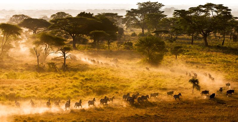The Run - Serengeti National Park