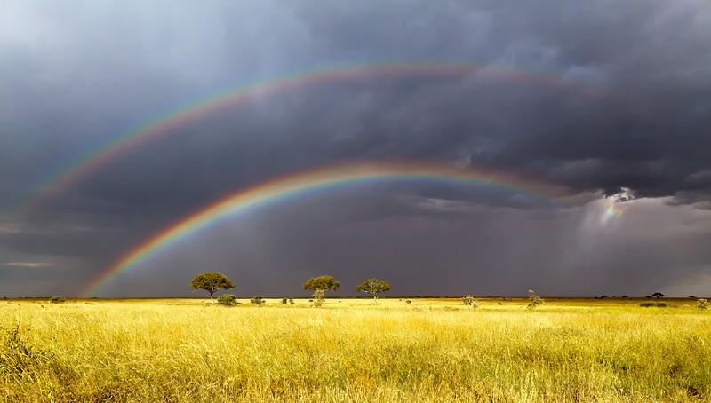 Serengeti Storm