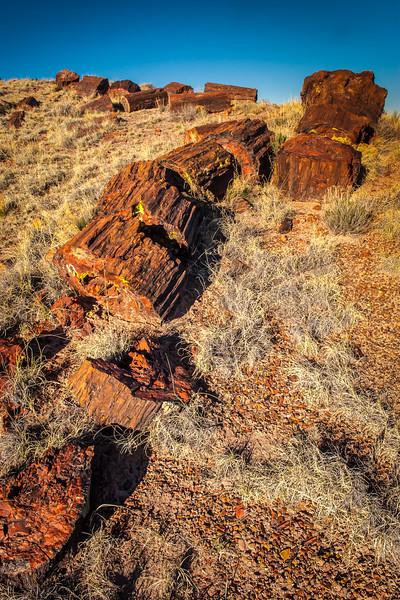 Petrified Log, Ridge