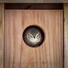 Watchful Wren
