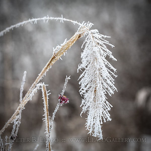 Soft Rime Ice