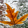 Rainy Fall Day