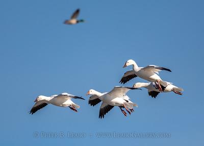 Landing Formation