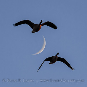 On the Wings of a Waxing Crescent Moon
