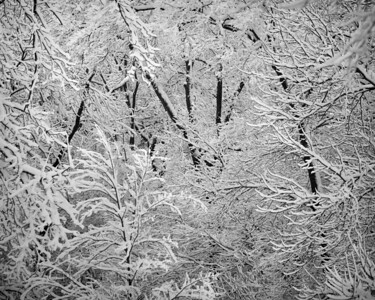 Winterscape Woods