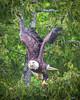 20160606-082251 eagle-2