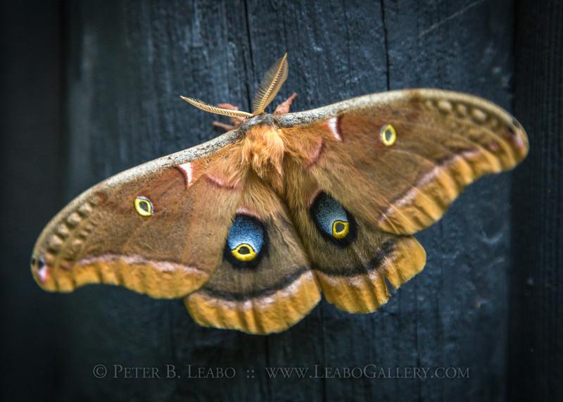 20140710-184851 WI moth