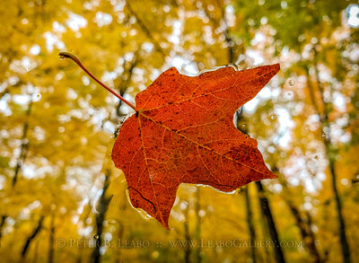 Floating Fall Color