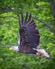 20160606-082254 eagle-2