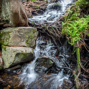 Northwoods Stream