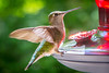 20150707-095513 WI Hummingbirds-2
