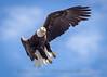 20160702-143854 WI - Eagle